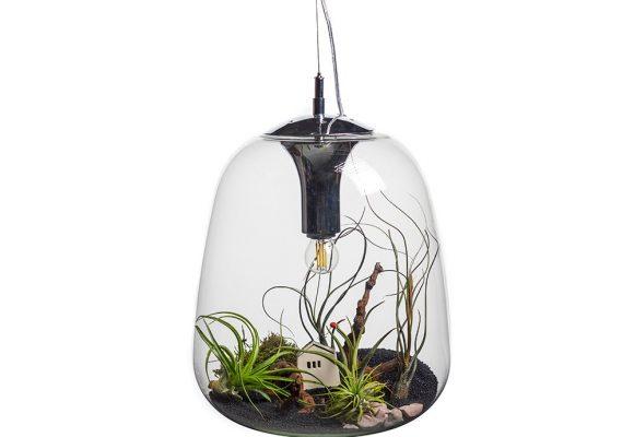 aerial-plant